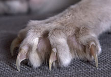 cat_claws150H_SS2014