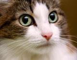 cats_eyes160W_ss2014