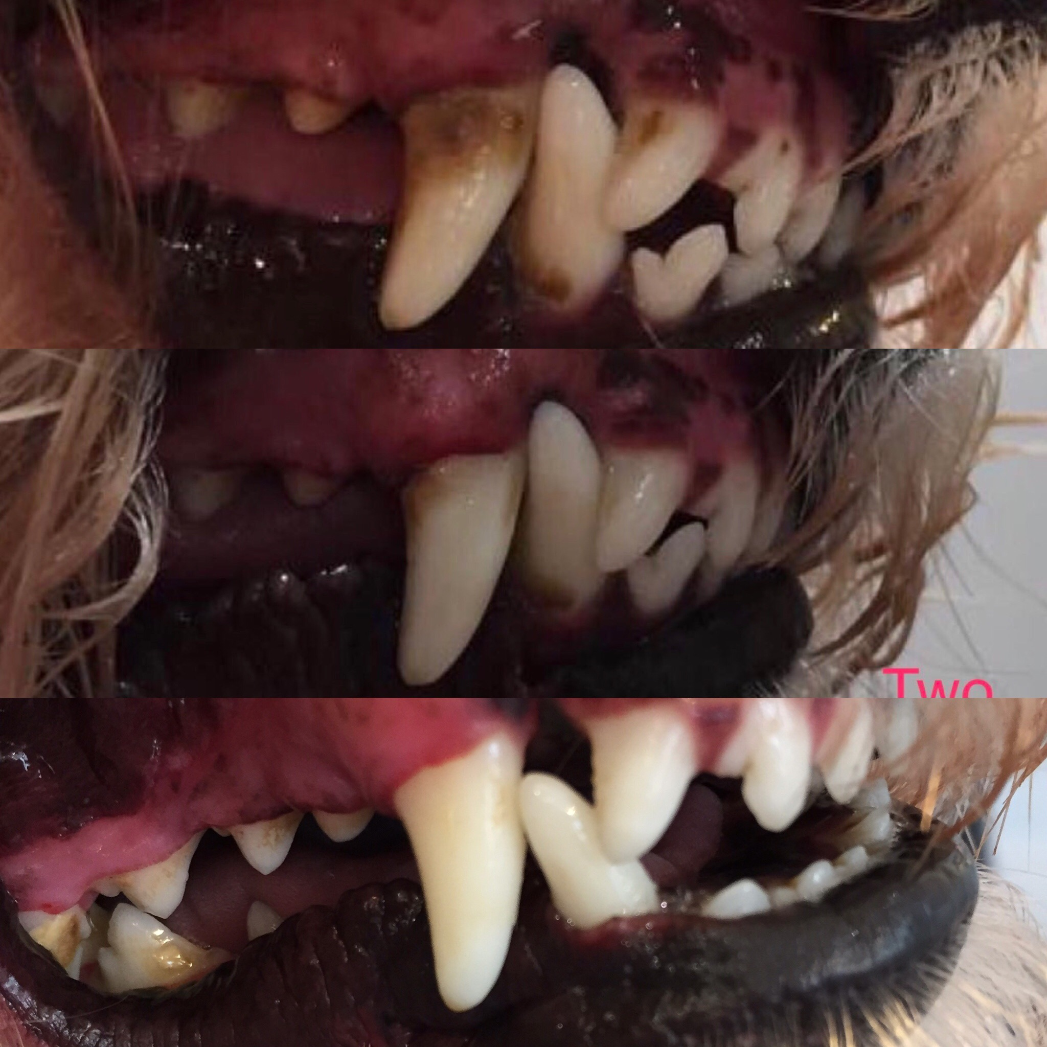 Teeth Cleaning For Dogs - A-Z Animal Care